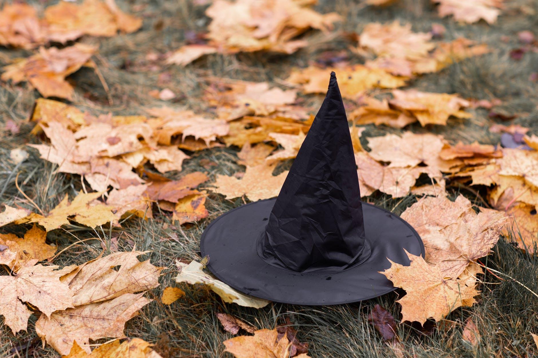hojas caídas otoño